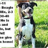 Adopt A Pet :: # 391-11 @ Animal Shelter - Zanesville, OH