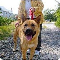 Adopt A Pet :: Venus - East Amherst, NY
