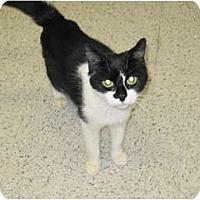 Adopt A Pet :: Lightning - Warminster, PA