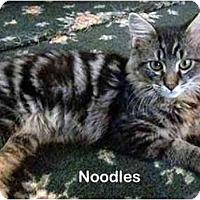 Adopt A Pet :: Noodles - Portland, OR