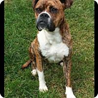 Adopt A Pet :: Charm - Turnersville, NJ