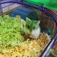 Adopt A Pet :: A1677709 - Los Angeles, CA