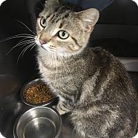 Adopt A Pet :: Addy - Jackson, MI