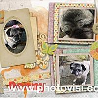 Adopt A Pet :: Penny - Walled Lake, MI