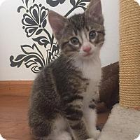 Adopt A Pet :: Jaden - Naperville, IL