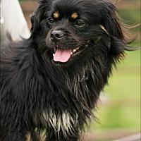 Adopt A Pet :: Max man - Madison, WI