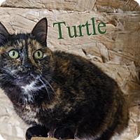 Adopt A Pet :: Turtle - Hamilton, MT