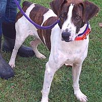 Adopt A Pet :: Leroy - Metamora, IN