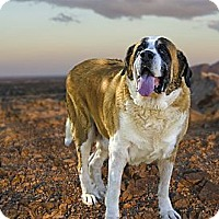 Adopt A Pet :: ROXY - Glendale, AZ