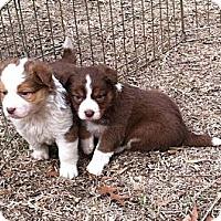 Adopt A Pet :: Heather - Columbia, SC