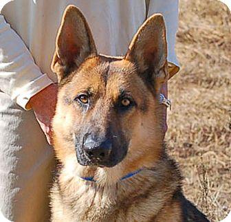 German Shepherd Dog Dog for adoption in Preston, Connecticut - Jess