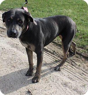 Labrador Retriever Mix Dog for adoption in East Hartford, Connecticut - Krystal in CT