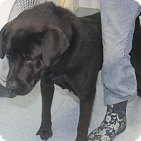 Adopt A Pet :: Bella*ADOPTED!* - Chicago, IL