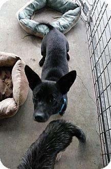 Dachshund Mix Dog for adoption in Hortense, Georgia - Sugar