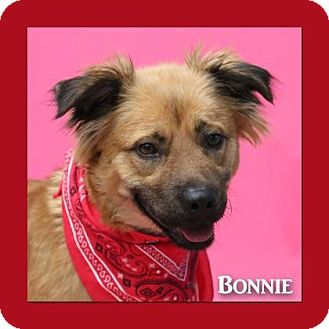 Retriever (Unknown Type) Mix Dog for adoption in Aiken, South Carolina - Bonnie