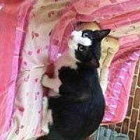 Adopt A Pet :: Bandit - Naples, FL