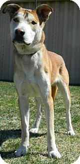 Terrier (Unknown Type, Medium)/Husky Mix Dog for adoption in Columbus, Nebraska - General