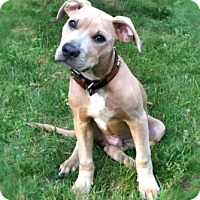 Adopt A Pet :: Boston - Framingham, MA