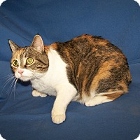 Adopt A Pet :: K-Shirley7-Vicky - Colorado Springs, CO