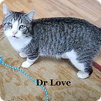 Adopt A Pet :: Dr. Love - Bentonville, AR