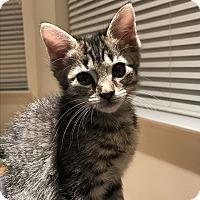 Adopt A Pet :: Minerva - Brooklyn, NY
