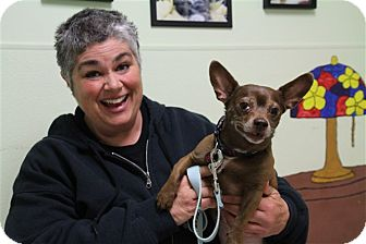 Chihuahua Mix Dog for adoption in Elyria, Ohio - Max