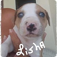 Adopt A Pet :: Lisha ready 7/13/17 - Palm Bay, FL
