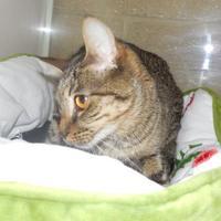 Adopt A Pet :: Melanie - Jackson, MI