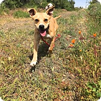 Adopt A Pet :: Junior - Rancho Cucamonga, CA