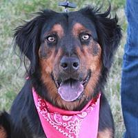 Adopt A Pet :: Jazzie - Garfield Heights, OH