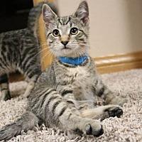 Adopt A Pet :: Wilhelm - Rochester, MN