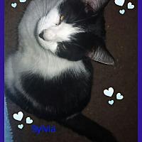 Adopt A Pet :: Sylvia - Goldsboro, NC