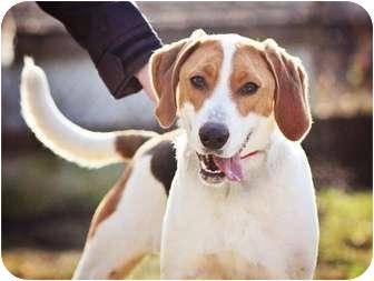 Hound (Unknown Type) Mix Dog for adoption in Port Hope, Ontario - Dennis