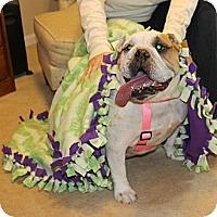 Adopt A Pet :: Lucy Lou - Winder, GA