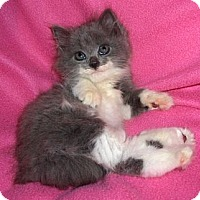 Adopt A Pet :: Di - Richmond, VA