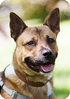 Shepherd (Unknown Type) Mix Dog for adoption in Jersey City, New Jersey - Happy Gilmore