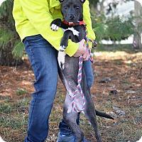 Adopt A Pet :: Levi - Springfield, IL