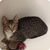 Adopt A Pet :: Bashful - San Fernando Valley, CA