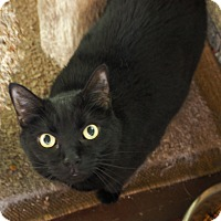 Adopt A Pet :: Miss Kitty - Cleveland, OH