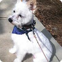Adopt A Pet :: Bordentown NJ - Bella - New Jersey, NJ