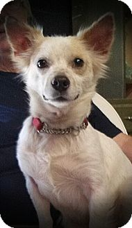Terrier (Unknown Type, Small) Mix Dog for adoption in Ormond Beach, Florida - Larry