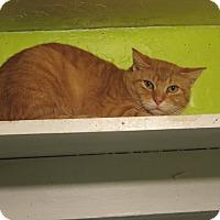 Adopt A Pet :: Keegan - Coos Bay, OR