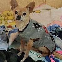 Adopt A Pet :: Romeo - Encino, CA