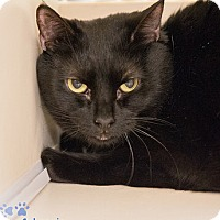 Adopt A Pet :: Lonnie - Merrifield, VA
