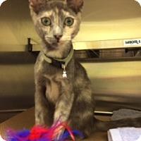 Adopt A Pet :: Dori (#10 TAS) - Trenton, NJ
