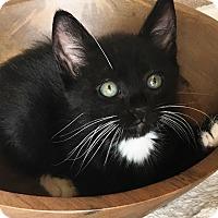 Adopt A Pet :: Aladdin - Riverside, CA