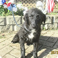 Adopt A Pet :: Asher - West Chicago, IL