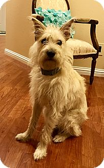 Terrier (Unknown Type, Medium) Mix Dog for adoption in Hollister, California - Gordon
