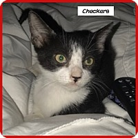 Adopt A Pet :: Checkers - Miami, FL