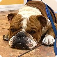 Adopt A Pet :: Steve - Odessa, FL